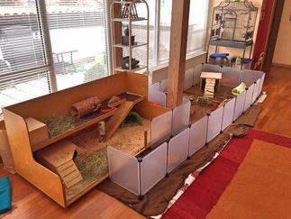 meerschweinchen in not wohnidee. Black Bedroom Furniture Sets. Home Design Ideas
